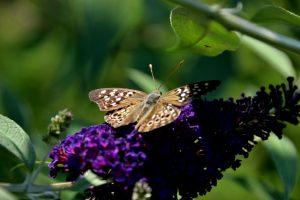 Discover Butterfly Hollow - A Hidden Retreat